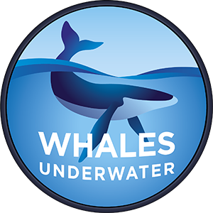 Whales Underwater Tours